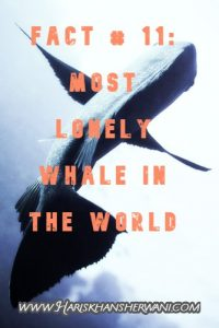 Fact # 11: Most Lonely Whale in the World