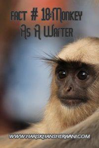 Fact # 18:Monkey As A Waiter