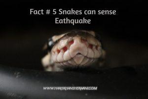 Fact # 5 Snakes can sense earthquakes