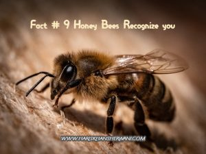 Fact # 9 Honey Bees Recognize you