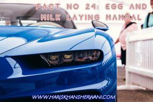 Fact no 24: Egg and Milk Laying Mammal