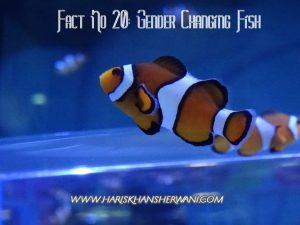 Fact # 20: Gender Changing Fish