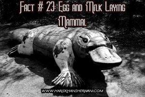 Fact # 23: Egg and Milk Laying Mammal