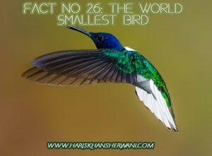 Fact no 26: The World Smallest Bird