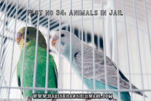 Fact no 34: Animals in Jail