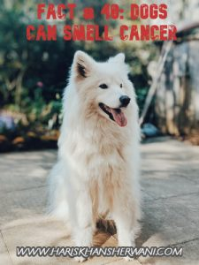 Fact # 40: Dogs can Smell Cancer